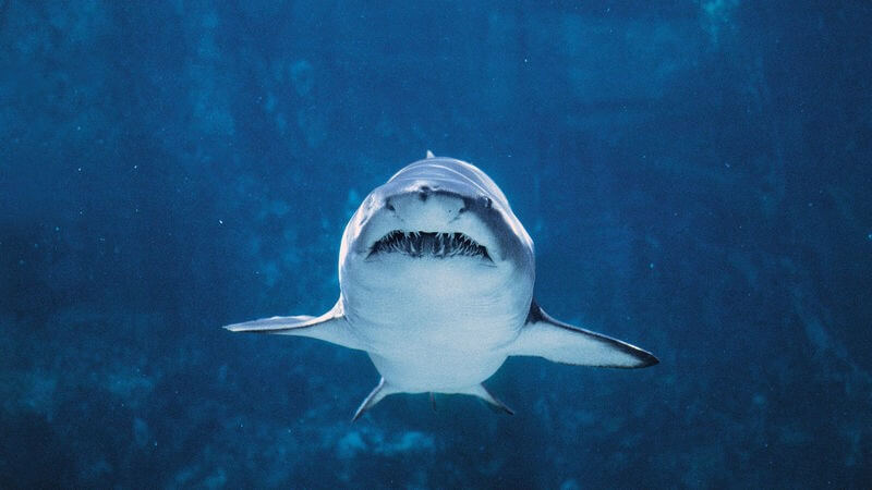 Magnet barriers could save sharks